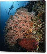 Diver Over Soft Coral Seascape Canvas Print