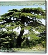 Do-00512 Cedar Forest Canvas Print