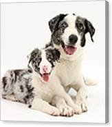 Dog And Puppy Canvas Print