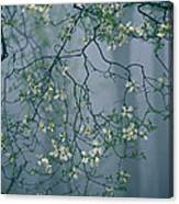 Dogwood Blossoms In A Foggy Forest Canvas Print