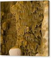 Dry Rot Fungus Canvas Print