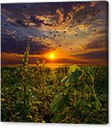 Early Bird Special Canvas Print