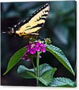 Eastern Tiger Swallowtail 3 Canvas Print