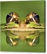 Edible Frog Rana Esculenta Canvas Print