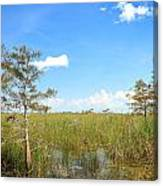 Everglades Landscape Canvas Print