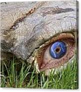 Eye Of A Dinosaur Lightning Canvas Print