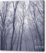 Fairy Tale Forest Canvas Print