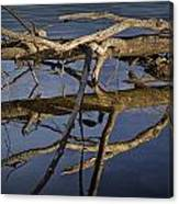 Fallen Tree Trunk With Reflections On The Muskegon River Canvas Print