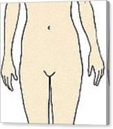 Female, Full Anterior View Canvas Print