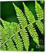 Fern Seed Canvas Print