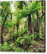 Fern Tree Canvas Print