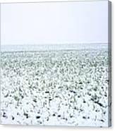 Field In Winter Canvas Print