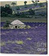 Field Of Lavender. Sault Canvas Print