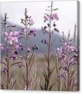 Fireweed In A Sea Of Grass Canvas Print