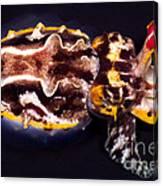 Flamboyant Cuttlefish Canvas Print