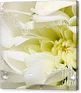 Fleur Blanche Canvas Print