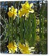 Flooded Daffodils Canvas Print