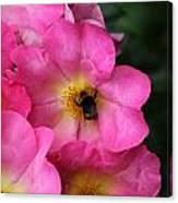 Floral 0017 Canvas Print