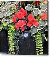 Flower Pots ........ 12 Canvas Print