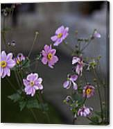 Flowers At The Cloisters Canvas Print