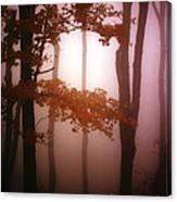 Foggy Misty Trees Canvas Print