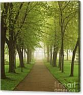 Foggy Park Canvas Print