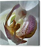 Foral Privacy Canvas Print
