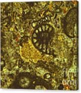 Foraminiferous Limestone Lm Canvas Print