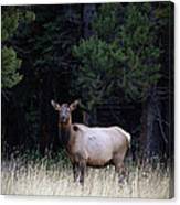 Forest Elk Canvas Print