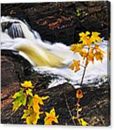 Forest River In The Fall Canvas Print