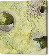 Fumarole Deposits In The Dallol Canvas Print