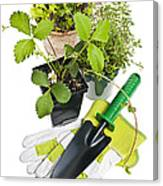 Gardening Tools And Plants Canvas Print