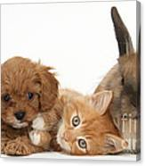 Ginger Kitten With Cavapoo Pup Canvas Print