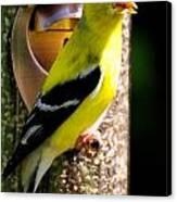 Golden Finch Canvas Print