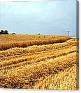 Golden Harvest Field 1 Canvas Print