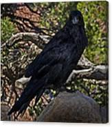 Grand Canyon Raven Canvas Print