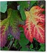Grape Leaves Canvas Print
