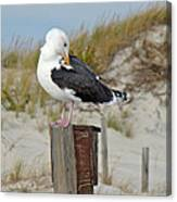 Great Black-backed Gull    Larus Marinus Canvas Print