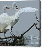 Great Egret Pair Canvas Print