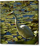 Great White Egret Perched On A Rock Canvas Print
