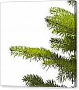 Green Branches Of A Christmas Tree Canvas Print