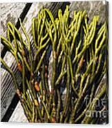 Green Fleece Seaweed Canvas Print