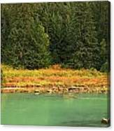 Grizzly Bear Fishing In Chilkoot River Canvas Print