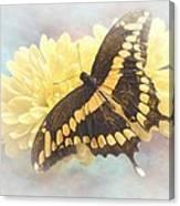 Grunge Giant Swallowtail Canvas Print