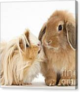 Guinea Pig And Rabbit Canvas Print