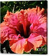 Hibiscus Blossom Canvas Print