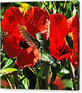 Hibiscus Heaven Canvas Print