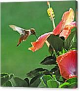 Hibiscus Hummer Canvas Print
