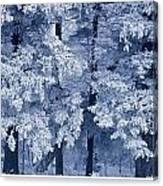 Hoarfrost On Trees In Winter, Birds Canvas Print