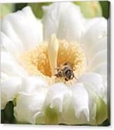 Honey Bee In Cactus Canvas Print
